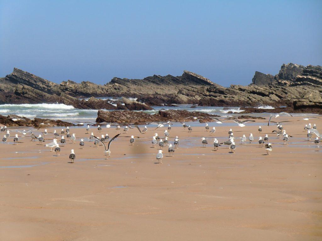 Playa Amalia, Alentejo