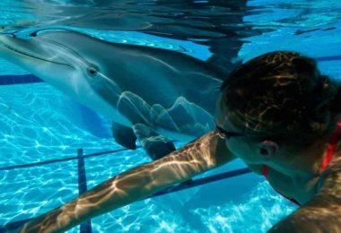 delfin robot, alternativa para el cautiverio de los animales, edge innovations